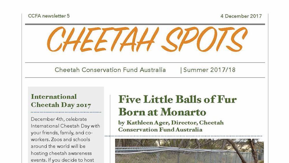 Cheetah Spots – Issue 5