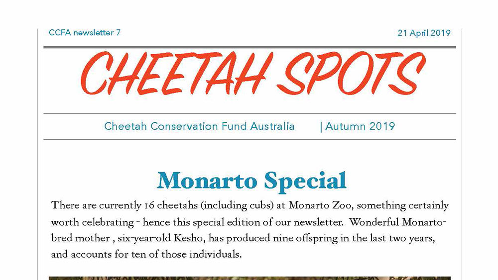 Cheetah Spots – Issue 7