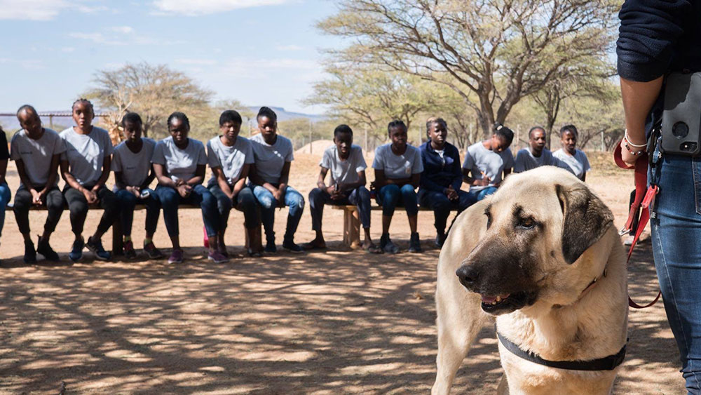 Eulogy for Karibib – CCF's Shining Spokesdog