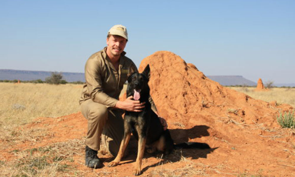 Dog Dream Job: Scat Detection in Cheetah Conservation
