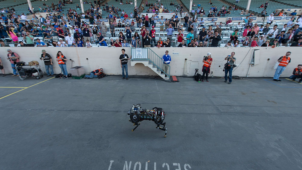 Cats, Dogs and Robots Built for Speed
