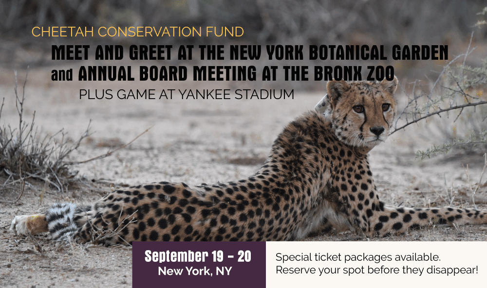 Open Session Of Ccf S Annual Board Meeting Cheetah Conservation