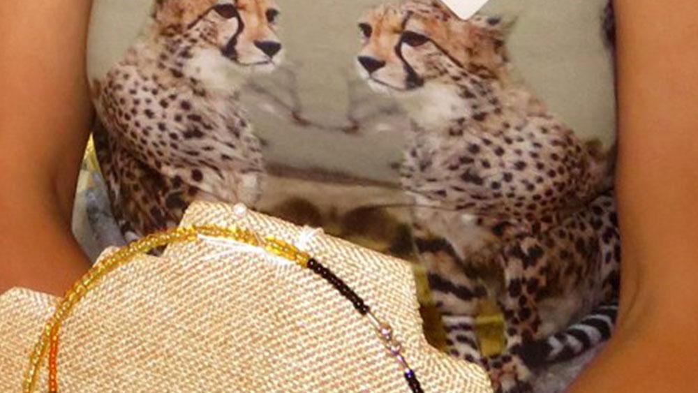 Cheetah in the Spotlight: A Day at the Alpaca Farm