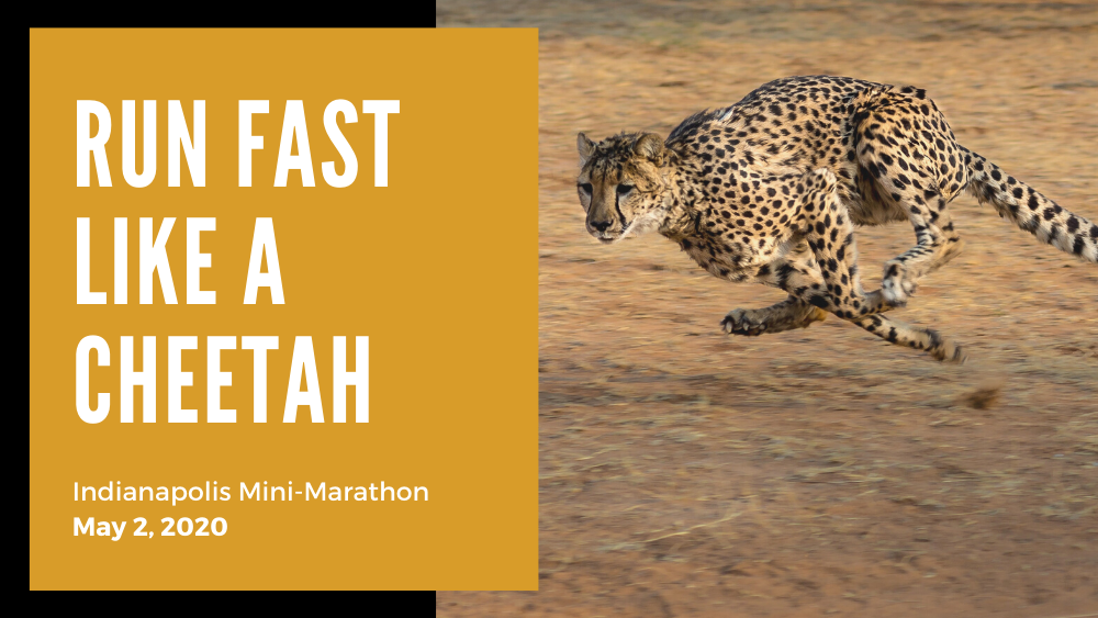 Run The Indianapolis Mini-Marathon And Support Cheetahs! How?