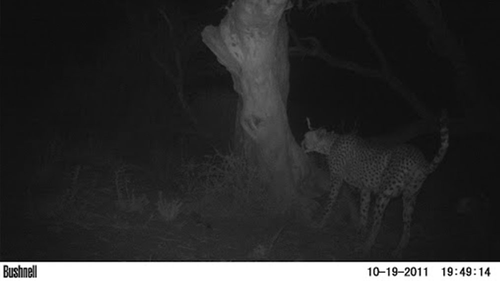 Camera Trap Images from the CCF Ecology Team