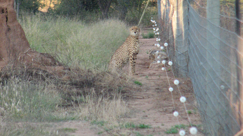 Students Leave, Cheetahs Show Up, And More From The Ecology Team
