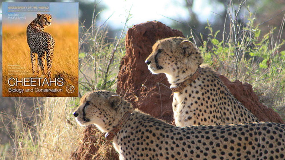 CCF Brings Forth Comprehensive Textbook on Cheetahs