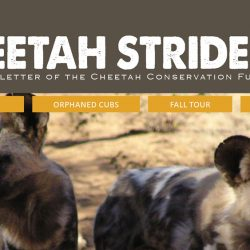 Cheetah Conservation Fund Cheetah Strides Newsletter No. 16