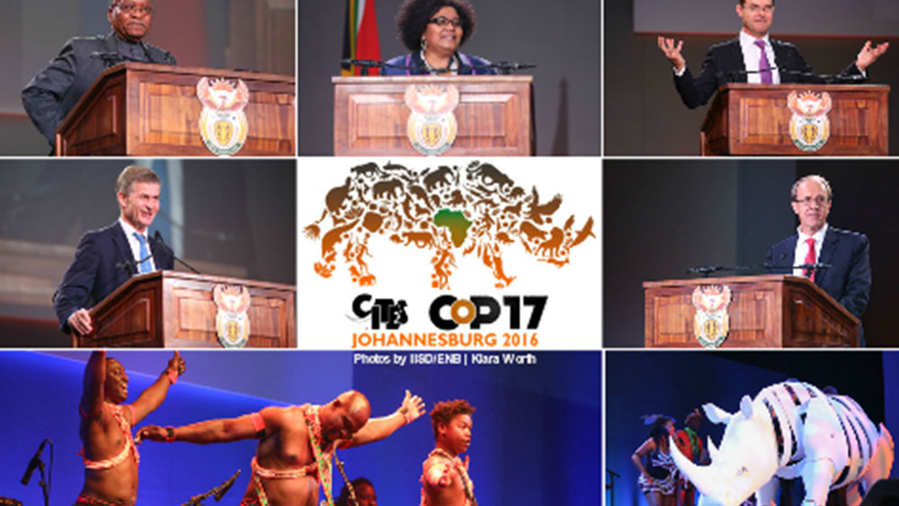 Illegal Cheetah Trade at CITES CoP17 in Johannesburg