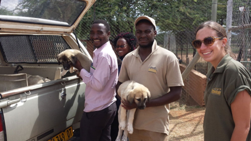 LGD Puppies to Tanzania