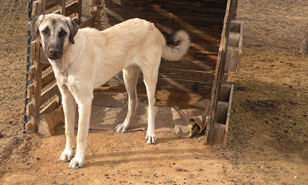 Dog Update – Lady and Bolt • Cheetah Conservation Fund