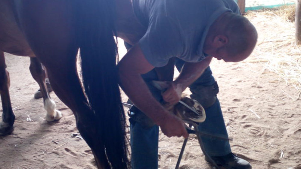 CCF Celebrates International Hoof Care Month