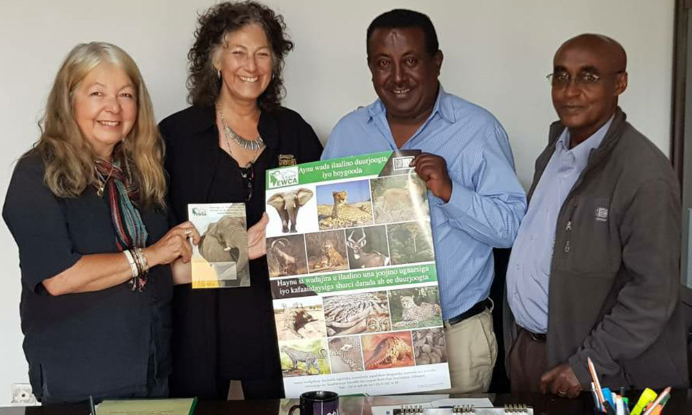Illegal Pet Trade - Awareness campaign posters in Ethiopia