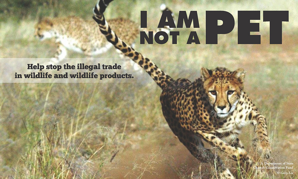 Illegal Pet Trade - Awareness campaign posters - I Am Not A Pet slogan