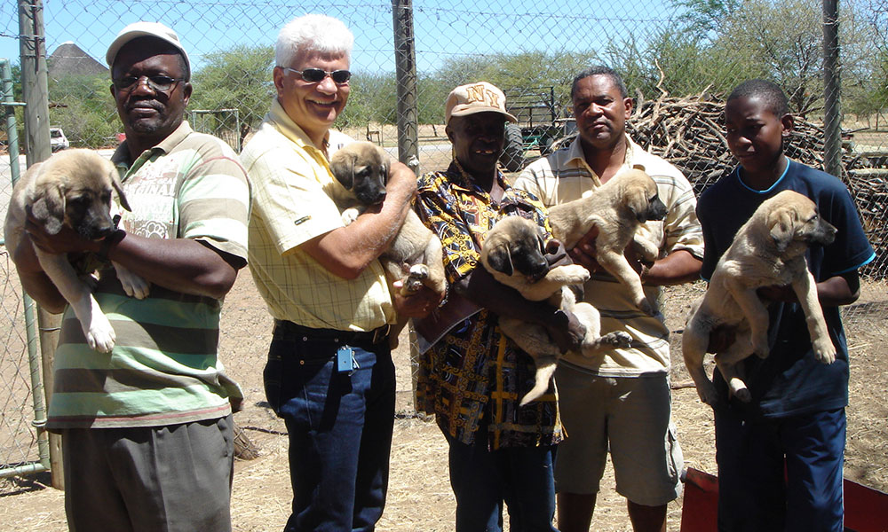 Human Wildlife Conflict mitigation - LGD puppies go home with farmers