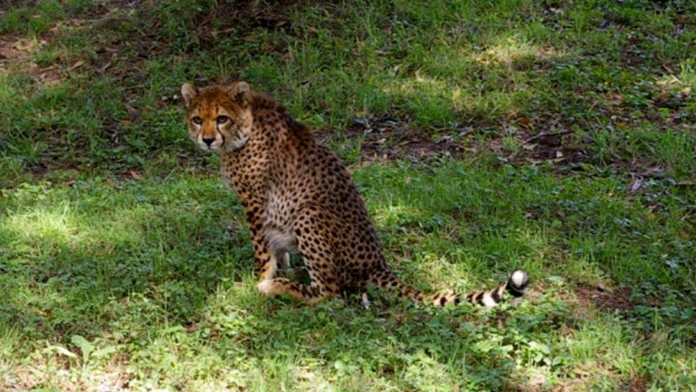 Ethiopia Visit – Cheetah Cub Named Scout