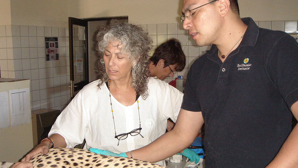 CCF Resident Cheetahs Undergo Annual Checkups