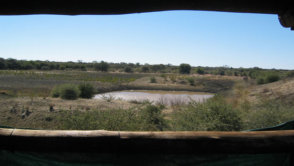 Annual Waterhole Count and other Research News