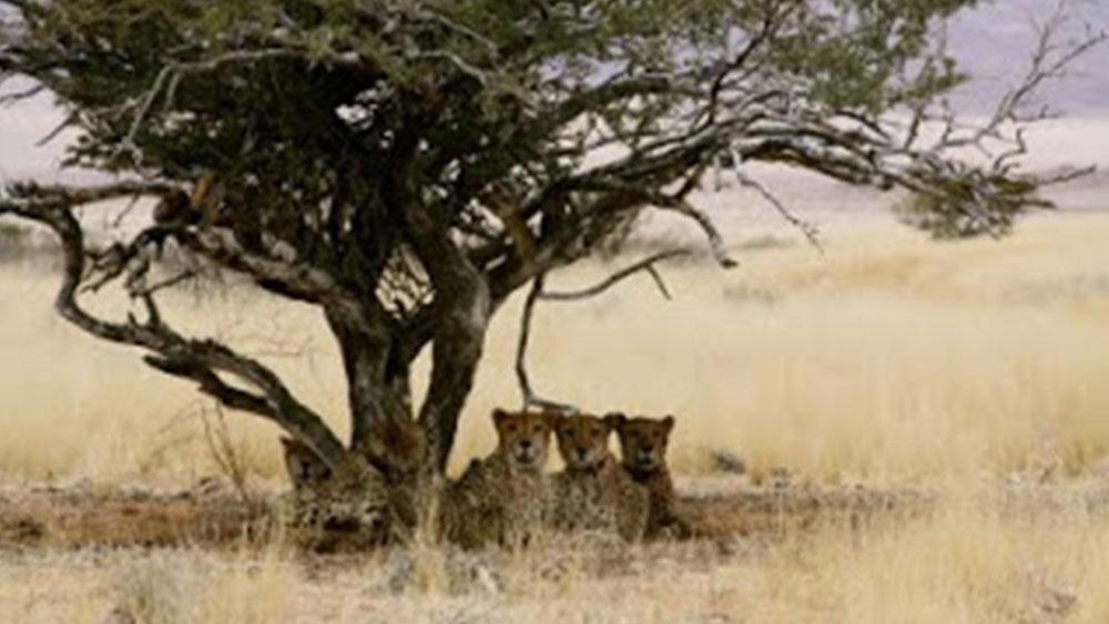 NamibRand Cheetahs – December 2009
