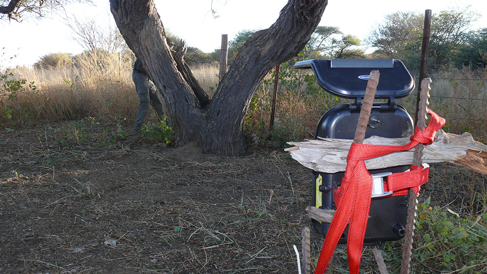 Camera-trap Study and Playtrees