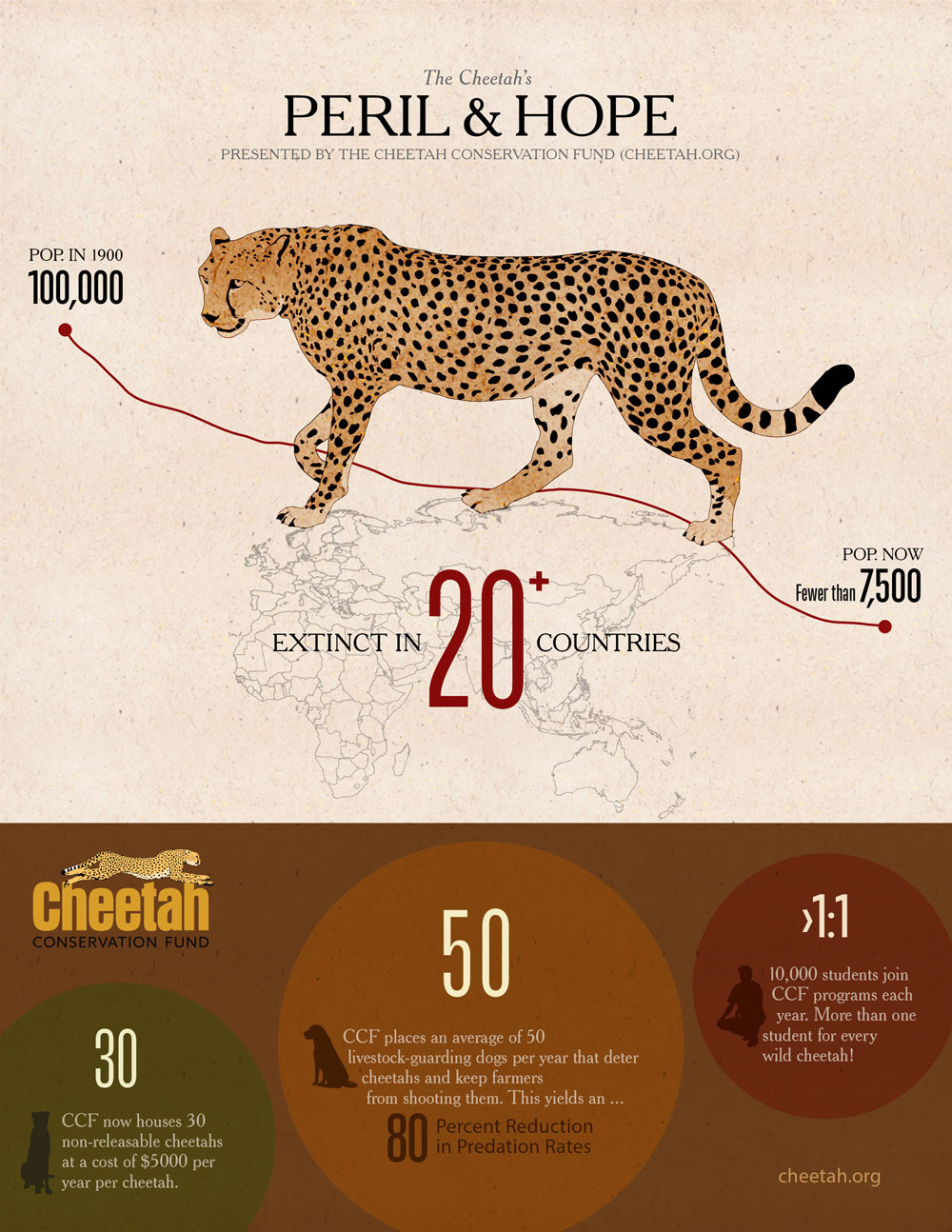 Ways to Give - Infographic on cheetah numbers and how CCF is helping