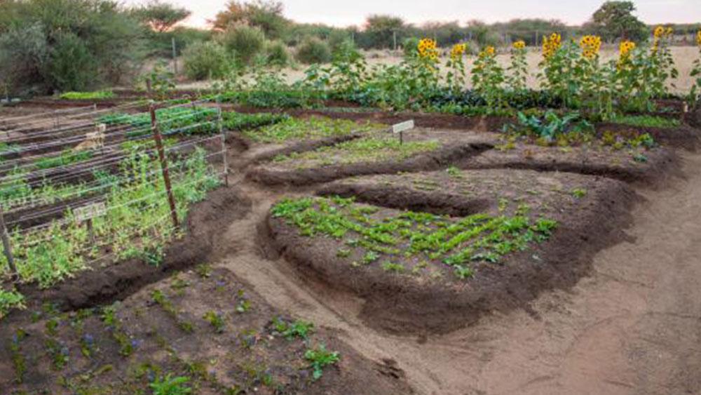 A Garden for Cheetahs