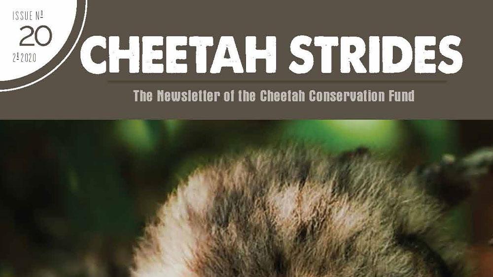 Cheetah Strides No. 20