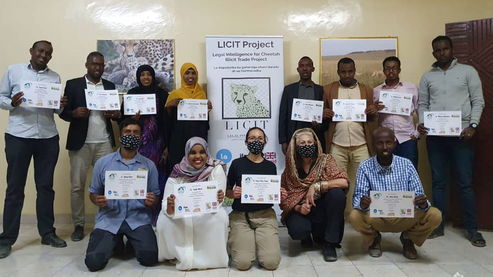 Cheetah Conservation Fund Holds First Training Workshop  for Somaliland Veterinarians