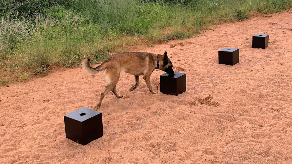 Sniffing Out Cheetahs: Training CCF's Scat Detection Dogs