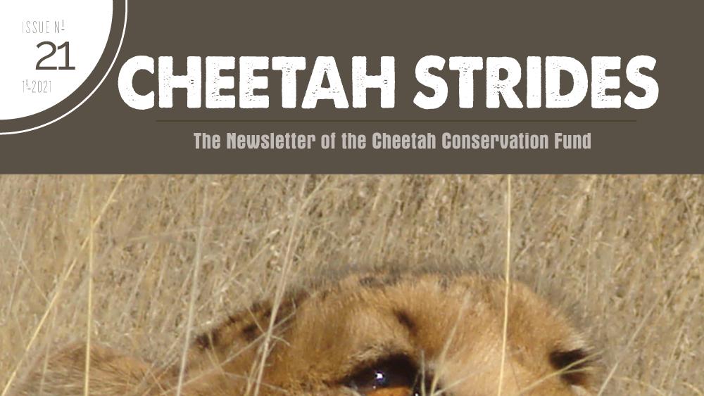 Cheetah Strides No. 21